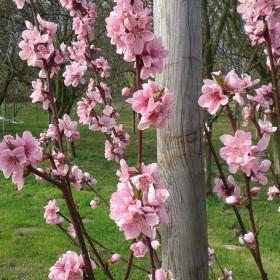 Sad wiosną