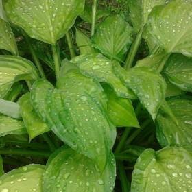 Moje rośliny po deszczu :)