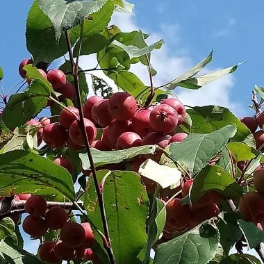 ...................i jabłka................