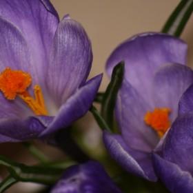 Wiosna z parapetu