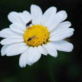 Kwiatki Emilki.