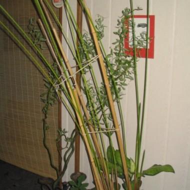 Kącik zieleni