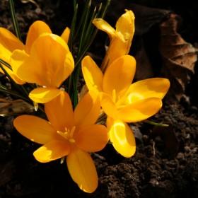 i nareszcie nadeszła wiosna !!!