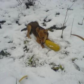 Zimowe zabawy na ogródku