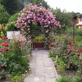 Ogród moich rodziców
