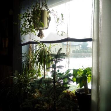 Nareszcie przyszedł czas na modę, która może być dziełem każdego. Uwielbiam modne wnętrza, trendy, ale najbardziej kradną moje serce rośliny, które w tych wnętrzach się znajdują. Tak modna ostatnio miejska dżungla to nie tylko efekt dekoracyjny, ale również świetne oczyszczanie powietrza. Co najlepsze w tym wszystkim to rośliny, które mają zdolności absorbujace zanieczyszczenia są przeważnie łatwe w utrzymaniu. Mój dom to królestwo naturalnego drewna, które kocham i szanuję i idealnym dla niego towarzystwem są właśnie rośliny. Do końca roku mam zamiar przytulić 100szt, bo póki co dopiero połowa oczyszcza moje wnętrze w przewadze: draceny, yuki, sansenviera, philodendron, paprocie, fikusy. Zapraszam do mojego królestwa zieleni w moim domu.