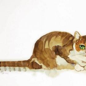 Koty Koty