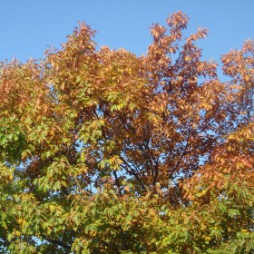 Jesień za moim oknem