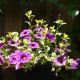 Udekorowany ogród
