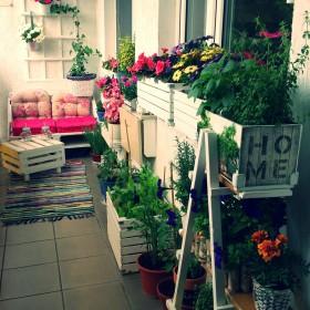 Balkon 2016 - Rajski ogród