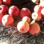 Pozostałe, Jesiennie........  słonecznie ..........z koronkami ............ - .........i wianuszek z jabłuszek , co zrobić , żeby się nie pomarszczyły?..........