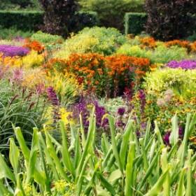 Najpopularniejsze byliny do ogrodu