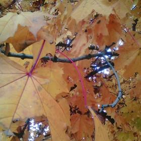 Jesień kolorami malowana