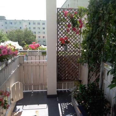 Mój mały ogródek pięknie rozkwitł tego roku :)))
