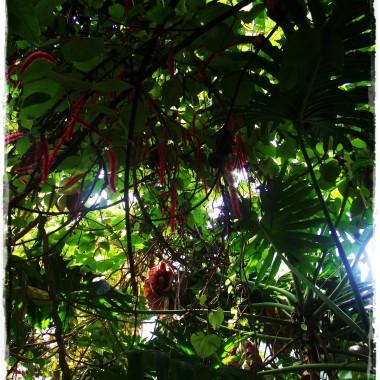 Spacerkiem po palmiarni poznańskiej&#x3B;