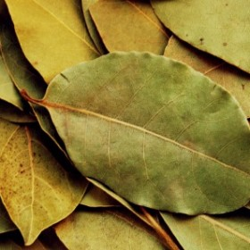 Spal kilka liści laurowych i zobacz, co się stanie