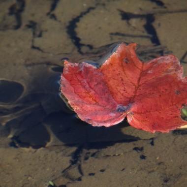 Kolory Pani jesieni...