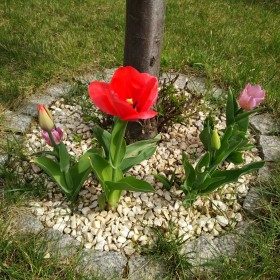 Mój ogród na wiosnę