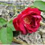 Rośliny, Deszczowo,nastrojowo - ..w samotności...