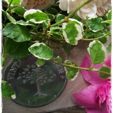 Praca w ogrodzie poprawia nastrój !Mój mini warzywnik bez chemii