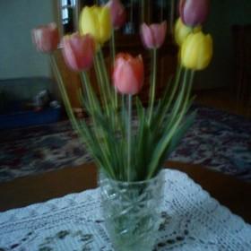 Kwiatki z mojej działki:)