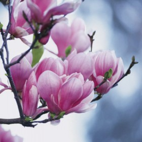 Kwiatowo, zielono, radośnie...