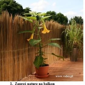 Osłony balkonowe, zaproś naturę na balkon