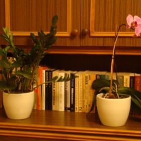 roślinki w moim domku