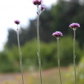 Moja łąka, cyka, pachnie, cieszy oko...