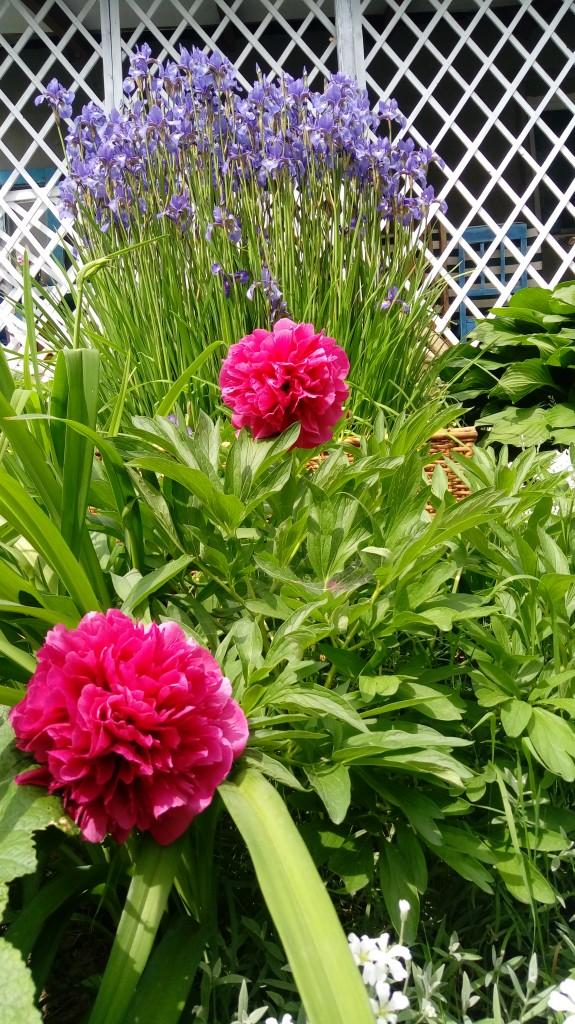 Ogród, Mały ogródek
