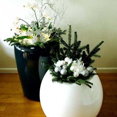 rośliny w domu i firmie