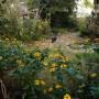 Ogród, Nieśmiała jeszcze jesień - kotka chodzi za mną  wszędzie