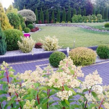 Mój lipcowy ogródek.