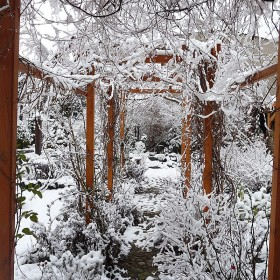 Styczeń w ogrodzie i  w domu