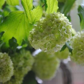 Majowa aromaterapia:)