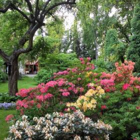 Stary ogród
