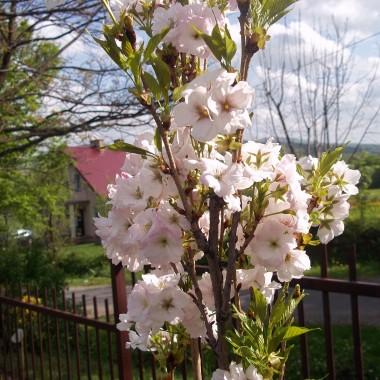 naaaaaaaaaaaareszcie wiosna :)