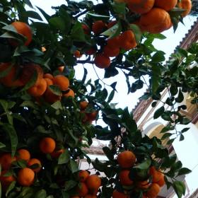andaluzyjskie ogrody