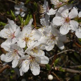 Wiosenne radości  .................