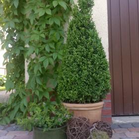 Mój ogród 2013