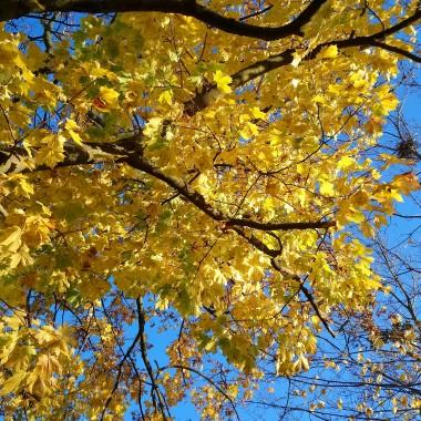 ................i złote liście...............