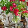 Rośliny, Maki i róże.................. - Najpiękniejsze czerwcowe kwiaty to maki i róże ....................pełno ich w ogrodzie i w domu.......................a także w moich pracach ......................:) Zresztą sami zobaczcie :) Zapraszam :)