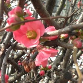 tutaj już wiosna:))