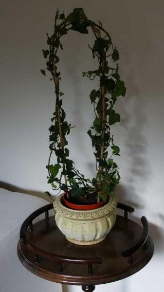 Rośliny, Rosliny w domu