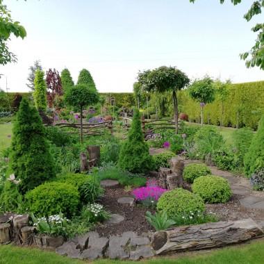 """Moja ogrodowa przygoda rozpoczęła się 11 lat temu. Co roku powstawały nowe zakątki o różnej formie. Zawsze chciałam mieć swój tajemniczy ogród i do tego ciągle dążę. Myślę ze powoli mi się to udaje. Choć jest w nim mnóstwo pracy to ciągle powstają nowe pomysły które staram się realizować. Np. drewniana rama okna zyskała nowy blask a ogród zdobią własnoręcznie wykonane przeze mnie karmniki. W jednej z części ogrodu powstał tzw. ogród wiejski. Rosną w nim wszystkie """"babcine"""" kwiaty takie jak: ostróżki, jeżówki, naparstnice, a wiosną całe mnóstwo tulipanów, żonkili i czosnków. Ta część ogrodu zmienia się najbardziej w ciągu roku. Jest on oddzielony od części warzywnej płotem z surowych gałęzi. Do ozdoby używam pni drzew i korzeni o ciekawych kształtach. Ostatnio na ścianie zawisły stare drzwi które kiedyś służyły jako wejście do stodoły. Wykończenia rabat zrobiono z grubych gałęzi dębowych a ścieżki są wyłożone plackami z jeszcze grubszych"""
