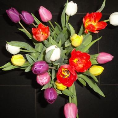 tulipany...tulipany