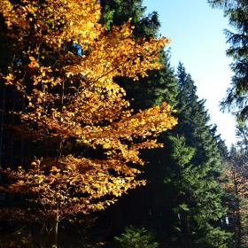 jesienna górska kraina