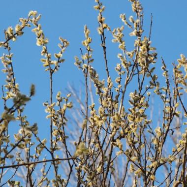 Z niecierpliwością czekamy na cieplejsze dni i nadejście wiosny... moje zeszłoroczne fotki  ze słonecznego spaceru  :)