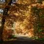 Leśne klimaty, JESIENNE TRENDY  :)