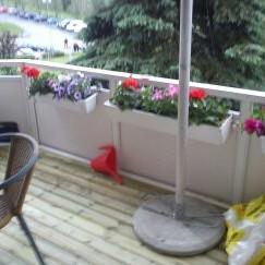 balkon w drzewie